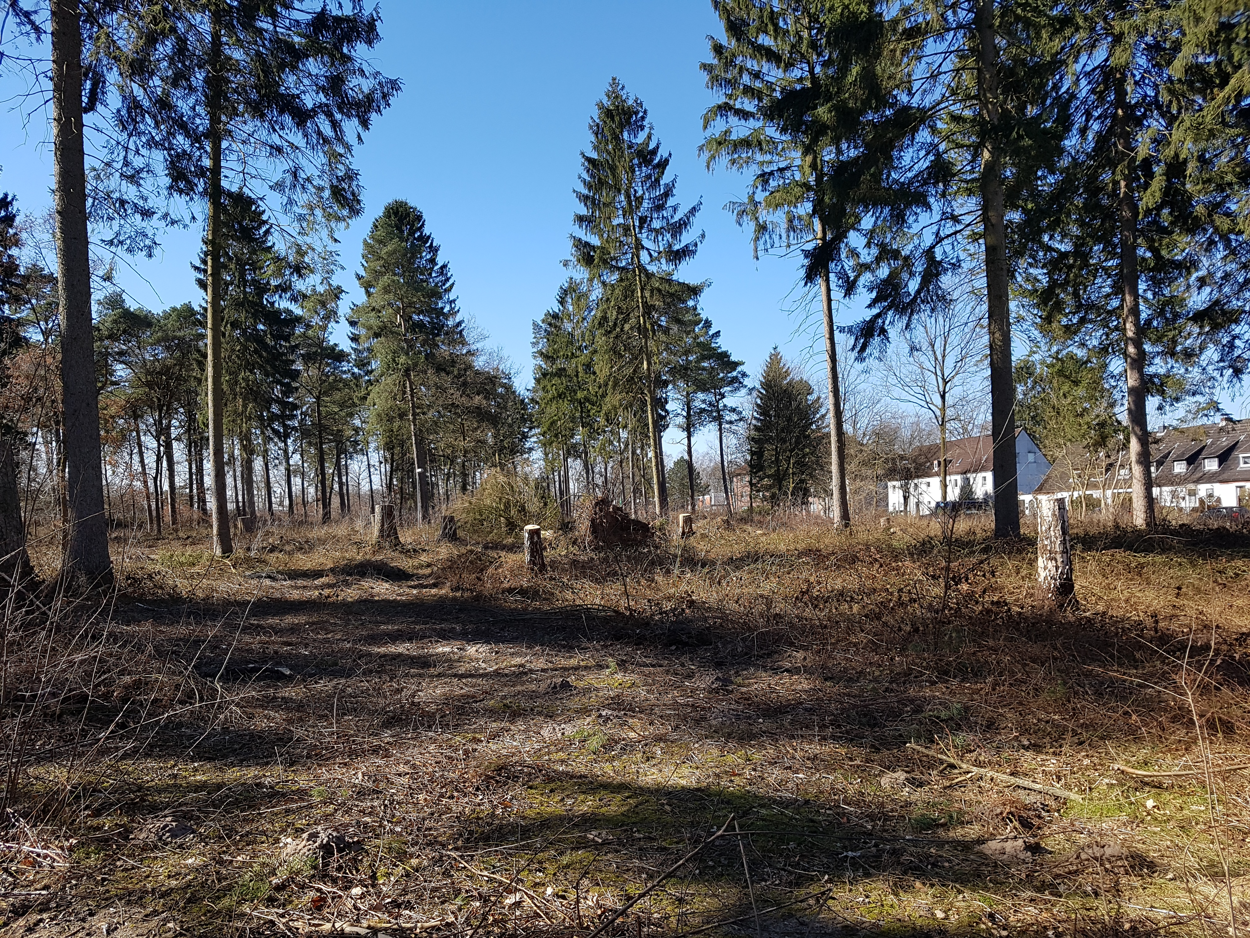 Der Wahlstedter Stadtwald